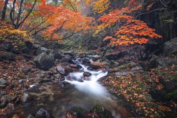 Long-exposure photo of stream flowing through forest in Autumn with red maple above small waterfall