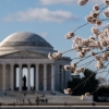 Jefferson Memorial on a blue sky day with blooming cherry blossoms in foreground
